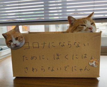【備中松山城】6月1日から開城!