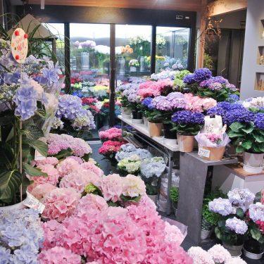 【フラワーショップ キクチ】お花で暮らしを彩る