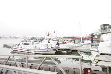 【真魚市|伊里漁業協同組合】漁港ならではの新鮮なお魚が買える「真魚市」再開!