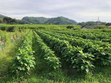 【ともときファーム吉備】無農薬・有機農法の野菜で免疫力アップ!