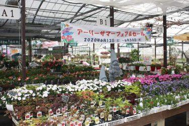 【農マル園芸 吉備路農園】アーリーサマーフェア&セール開催中6月30日まで