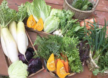 【さとみ農園 ほっこり村】地域応援商品券が利用可能!完全無農薬・有機栽培にこだわった卵や野菜などを販売