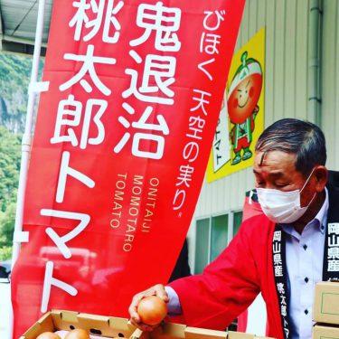 Ja晴れの国岡山、びほく統括本部管内で栽培中!「鬼退治桃太郎トマト」の販売開始。